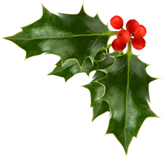 A sprig of green holly with red berries.